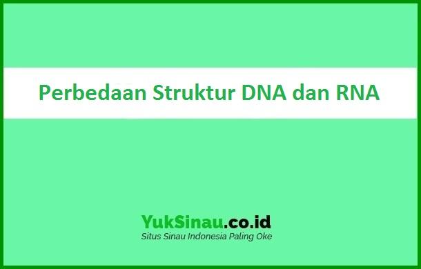 Perbedaan Struktur DNA dan RNA