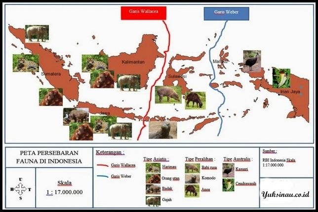 Peta Persebaran Flora Dan Fauna Di Indonesia Gambar Jenis Wilayah