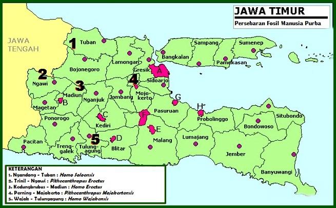 Persebaran Manusia Purba Di Indonesia Dan Penjelasannya