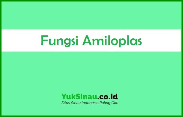 Fungsi Amiloplas