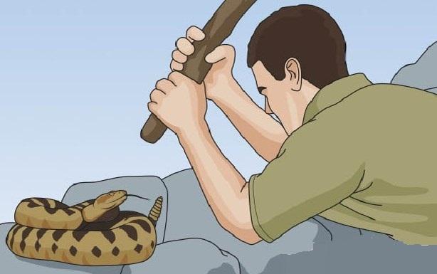 mimpi membunuh ular kecil hitam