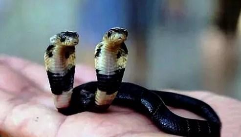 arti mimpi ular masuk rumah menurut hindu