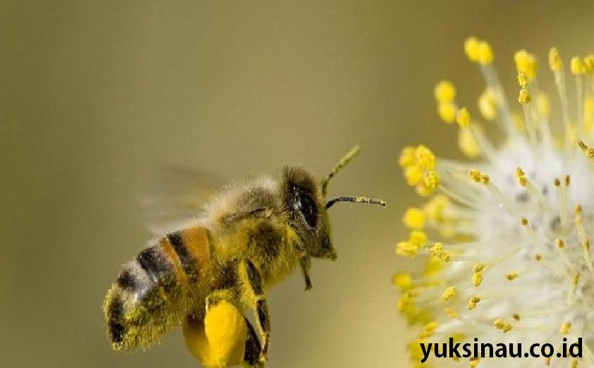 Arti Mimpi Dikejar Lebah