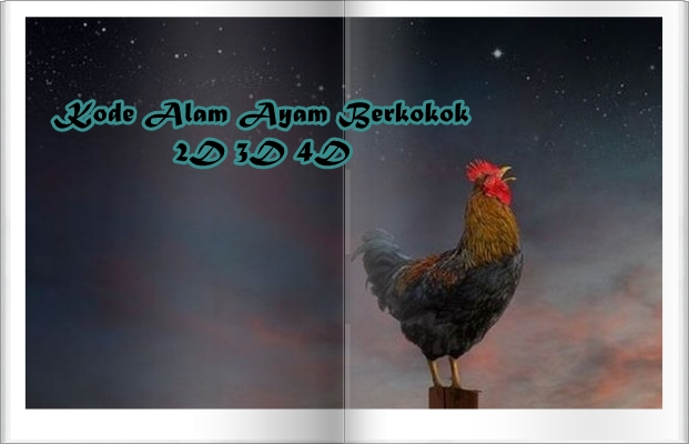 Kode Alam Ayam Berkokok