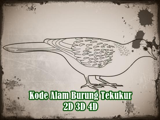Kode Alam Burung Tekukur