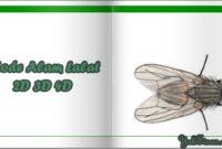 Kode Alam Lalat