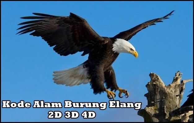 Kode Alam Burung Elang