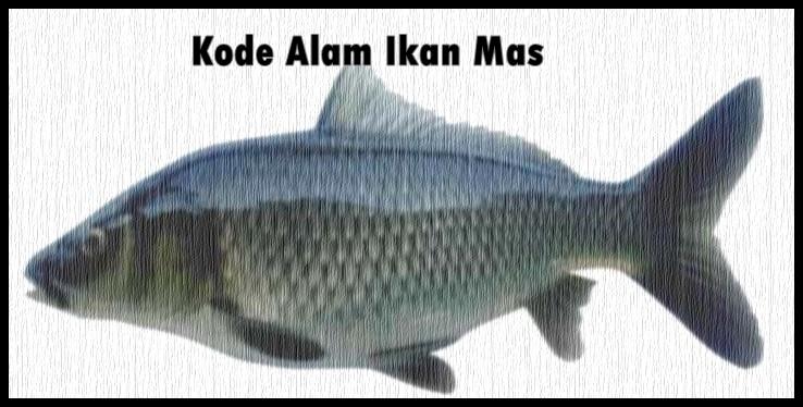 Kode Alam Ikan Mas