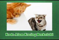 Kode Alam Kucing Berkelahi